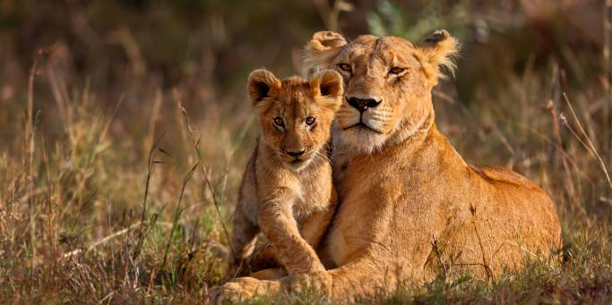 wildlife tours victoria
